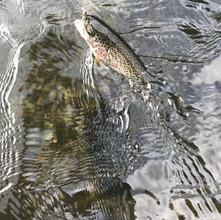 Trout fishing on Hiwassee.jpeg