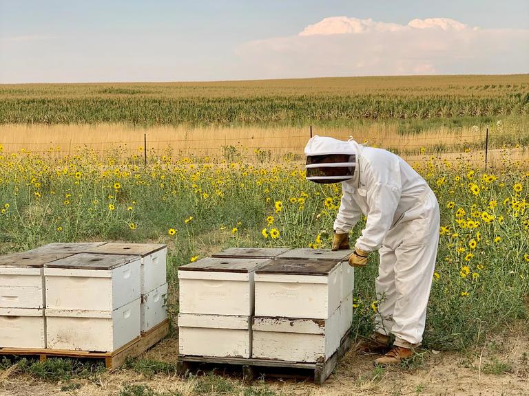 Clark Bee Hives