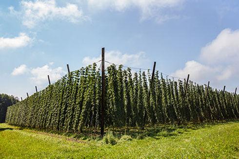 ohpr_lp-hops-farm-.jpg