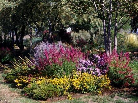 Colorado Perennials