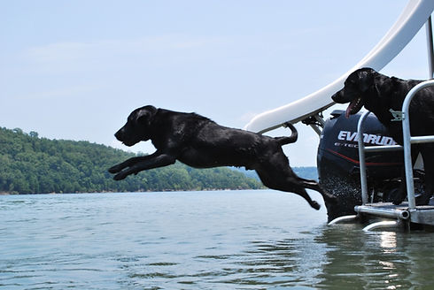 Colt the dog jumping in the lake