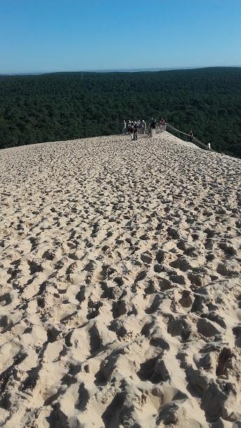 ピラ砂丘 森側