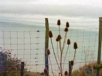 By-the-sea-still-life-photo-akua-allen3.
