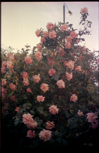 Roses_35m_Test.tif