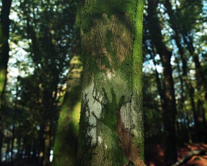 hand-on-tree.jpg