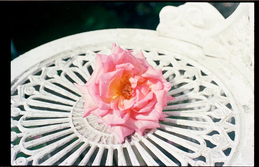 roses_test_35mm (2).tif