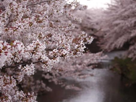桜川考 世阿弥の心に吹く嵐