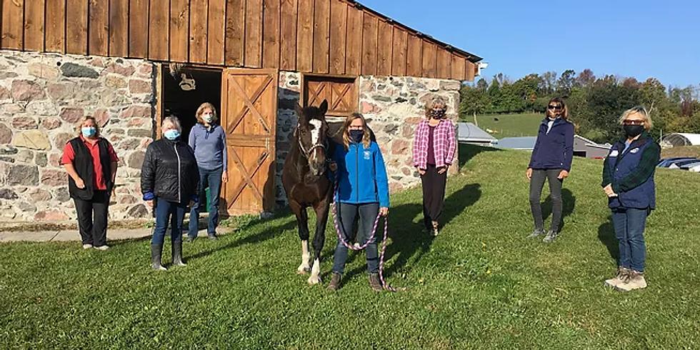 The Masterson Method Beyond Horse Massage Hands-on Seminar workshop