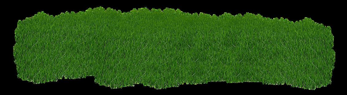 grass-2073071_1920.png