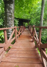 bridge to cabin 1.jpg