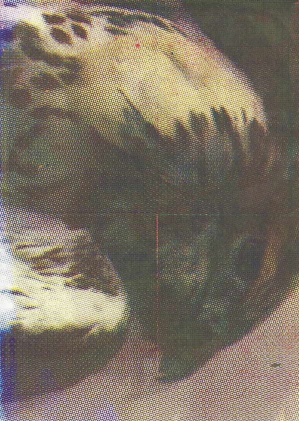 bird (scan overview).jpeg