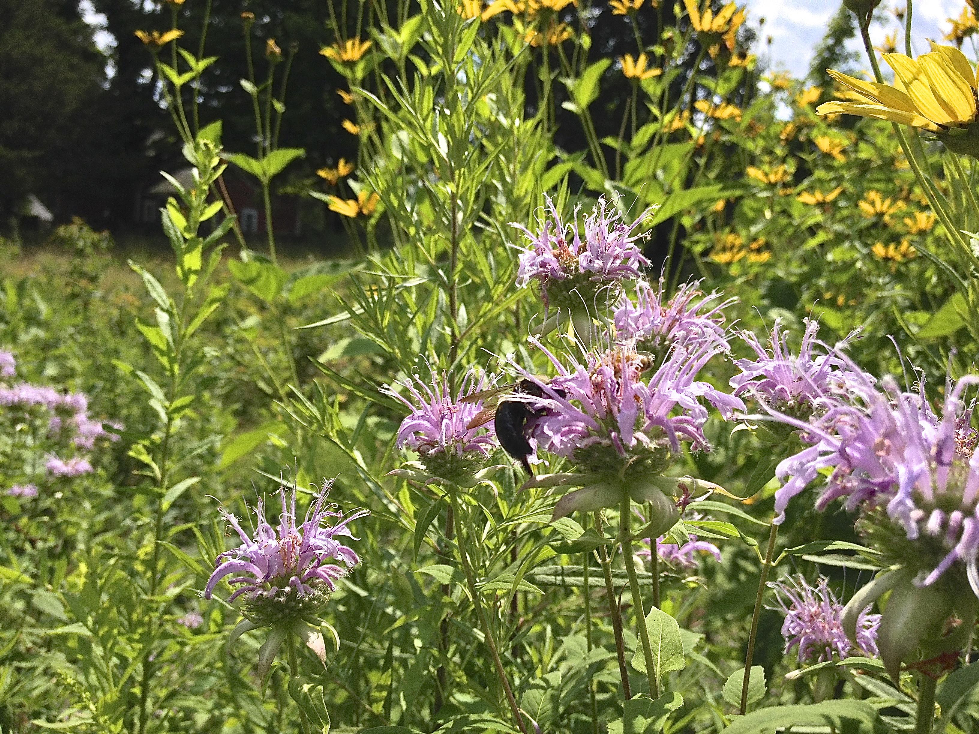 IMG_3492 flowers wf