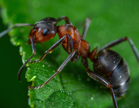 home-insect-img-2.jpg