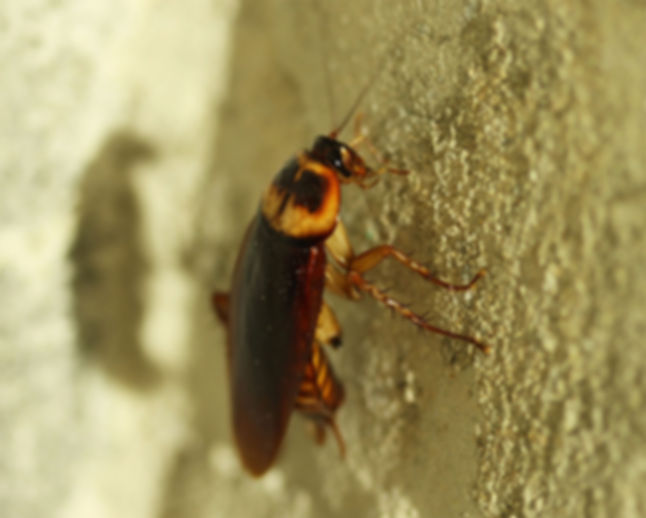 insect-information-image1.jpg