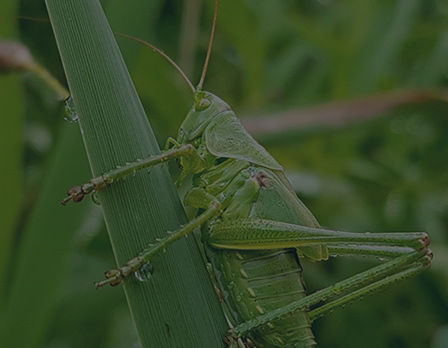 home-insect-img-3.jpg