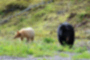 Wildnistour mit Bärenbeobachtung