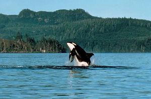 Walbeobachtungstouren in Kanada