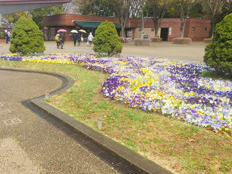 昭和記念公園と子供の国に行って参りました♪