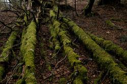 原生林の森歩き