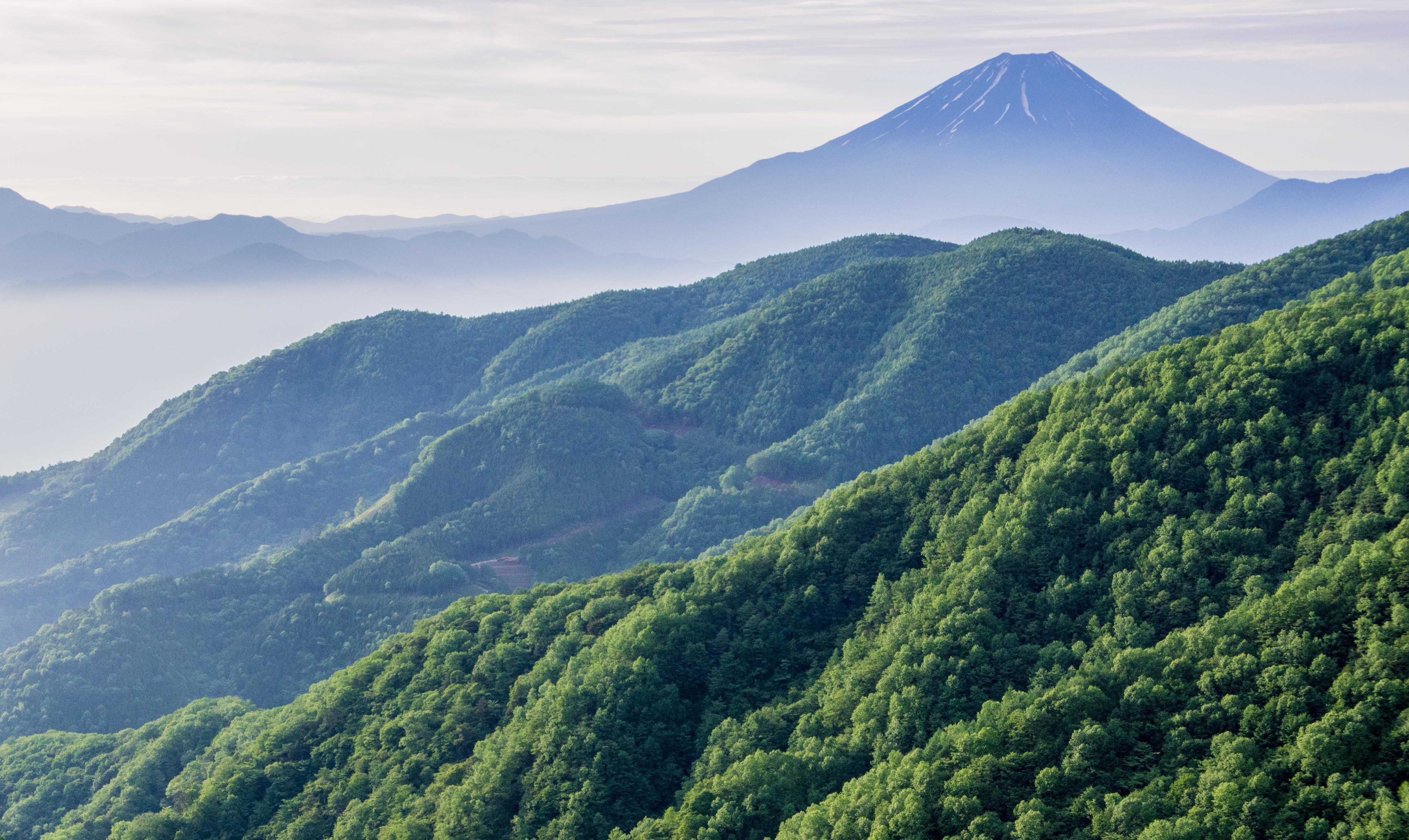 新緑の富士山(丸山林道より)