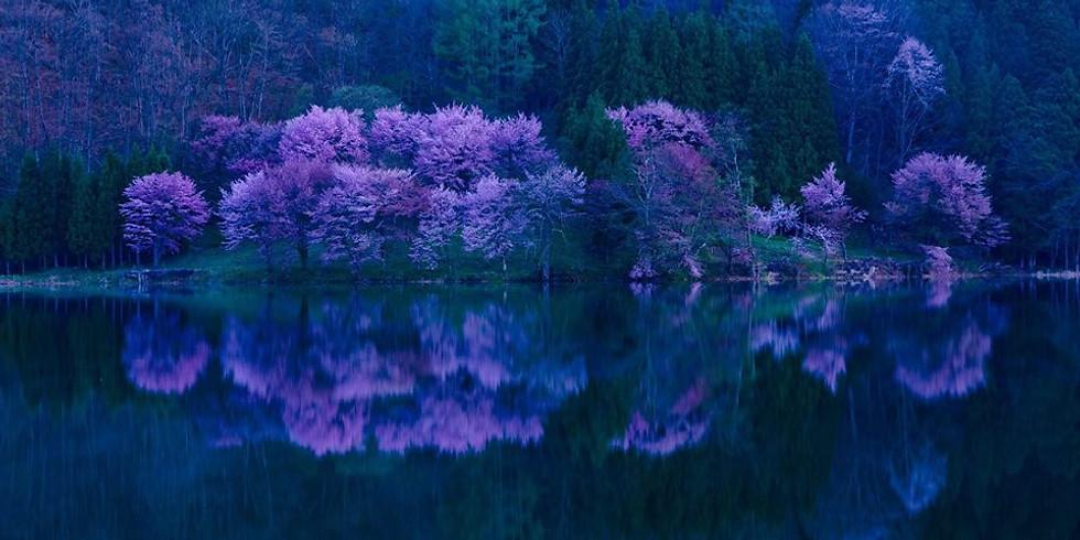 4/15 信州中綱湖の名桜と栂池自然園展望スノーハイキング