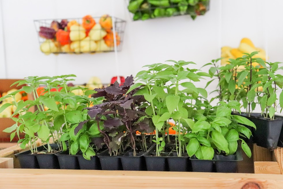 Herbs and Plants