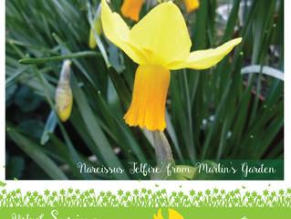 Virtual Spring Flower Show 2020