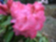 beautiful flower bloom