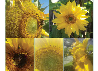 COVID-19 Update & Virtual Garden Tours