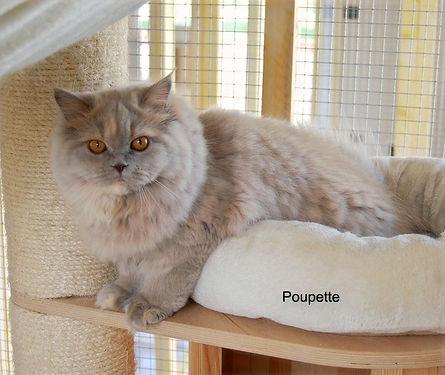 poupette_edited.jpg