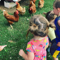 chickens and littles