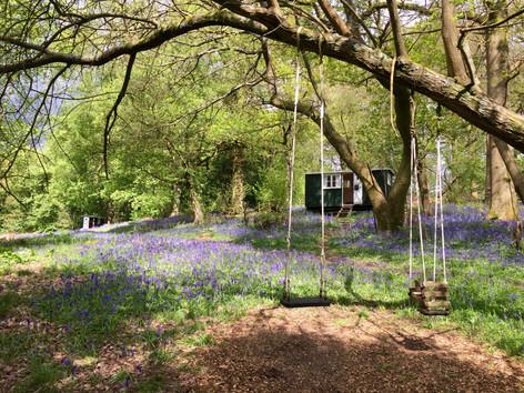 Woodland swings