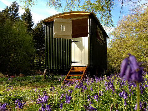Shepherds hut in the bluebells