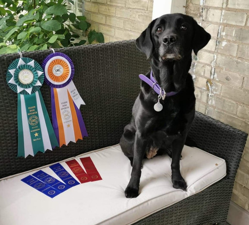 Onyx with her Novice Nosework Title