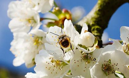 bee_on_blossom.jpg