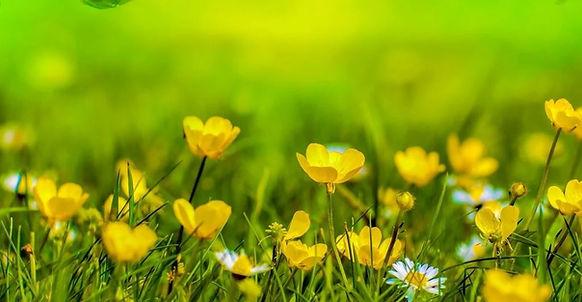 Lawn_flowers.jpg