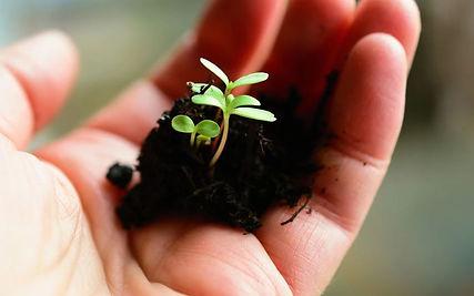 Seedlings_in_hand.jpg