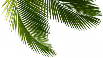 palm tree_edited.png