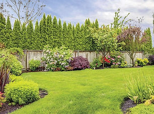 web_backyard-lawn--garden-fence.jpg