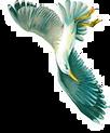 oiseau 2.png