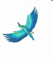 oiseau.jpeg