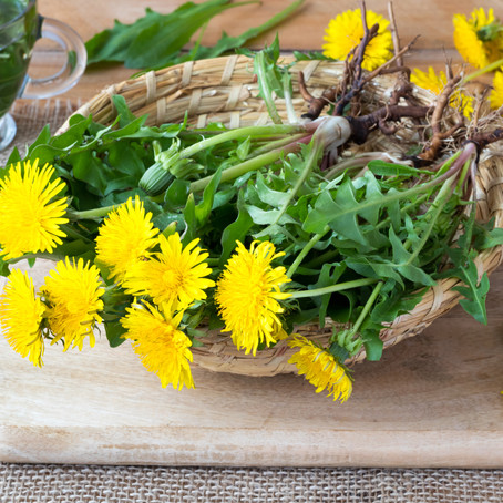 Plant Of The Month: Dandelion