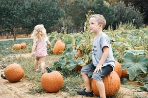 HVO Pumpkin