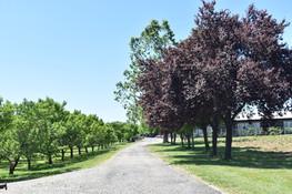 HVO Orchard Lane