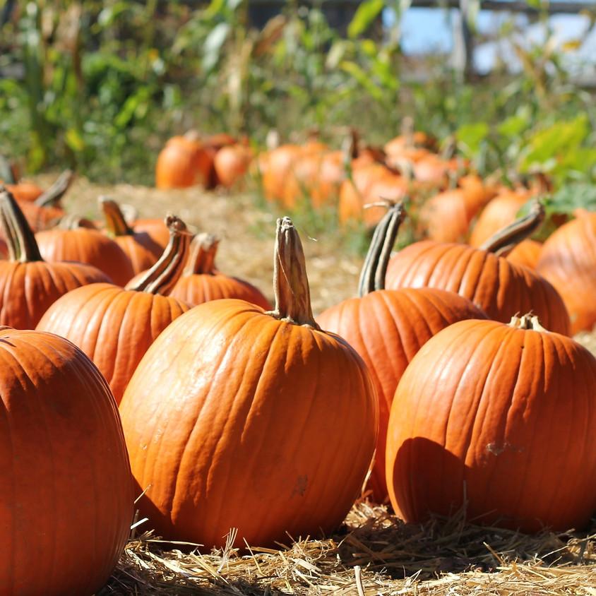 HVO Pumpkin Palooza Week!