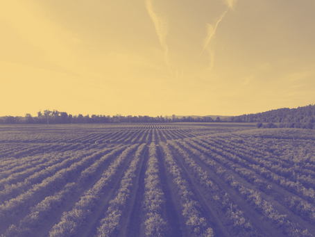 Hot Topic Highlight – Agriculture Act 2020