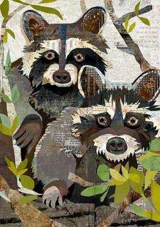 raccoons-1.jpg