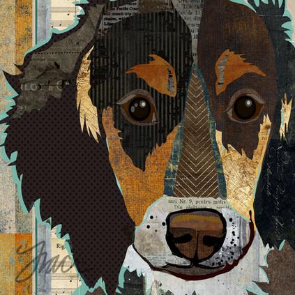 long-haired-dachshund-no-words.jpg