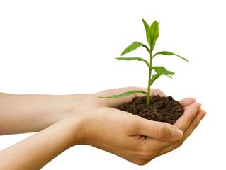 Primeiros passos para iniciar uma pequena empresa