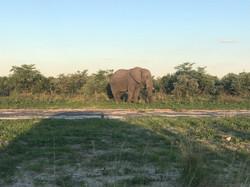 Elephants along the road